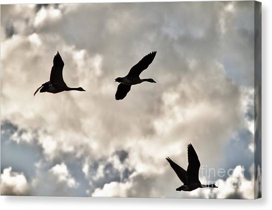 Geese Against The Sky Canvas Print by Christopher Purcell