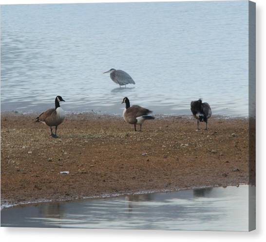 Geese And Heron Canvas Print