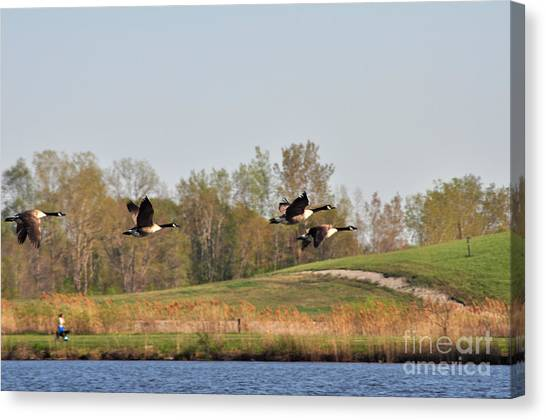 Geese Flying Canvas Print by Ginger Harris