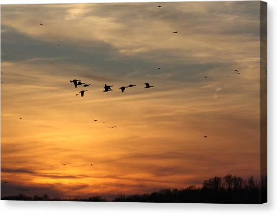 Geese In Sunset Canvas Print