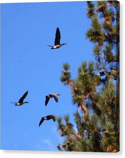 Geese In Tahoe Canvas Print by Ernie Claudio