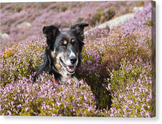 Gelert - My Dog Canvas Print by Rory Trappe