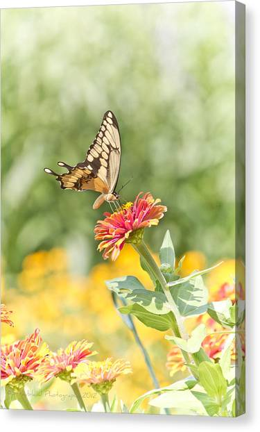 Gentle Landing Canvas Print by Straublund Photography