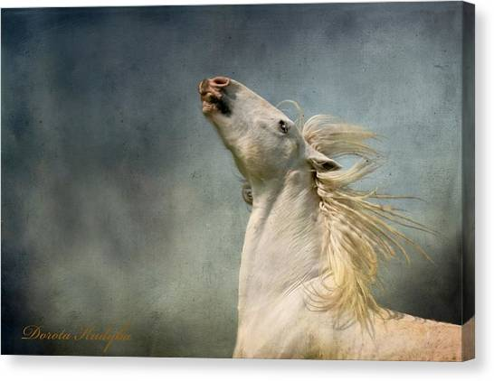 Draft Horses Canvas Print - Georgiano Cavalli by Dorota Kudyba
