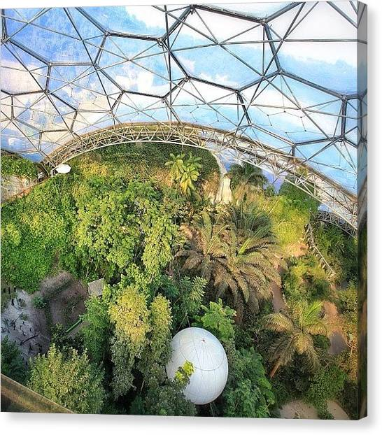 Rainforests Canvas Print - Getting Jelly Knees 165 Feet Up On The by Phil Martin