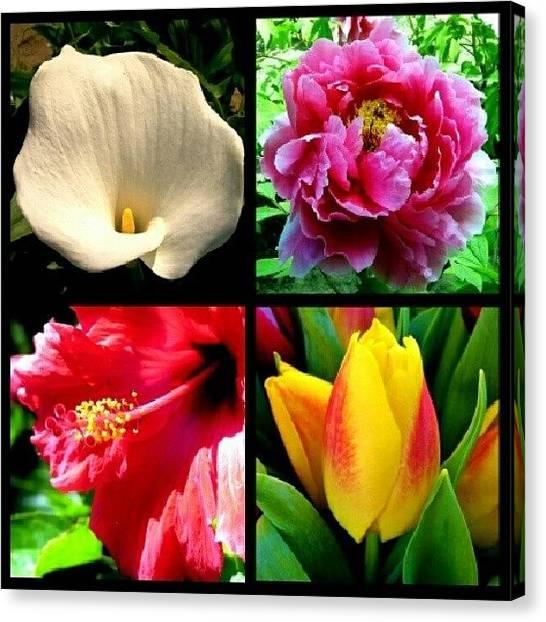 Lilies Canvas Print - Getting That Summer Feeling Even Though by Lauren Dunn