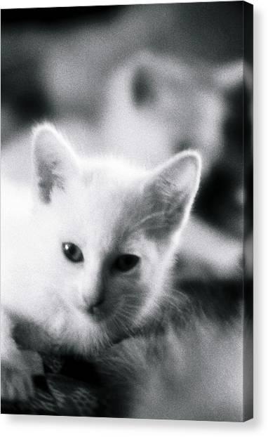 Ghost Kitties Canvas Print