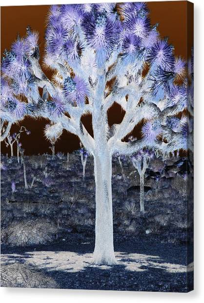 Ghostly Joshua Tree Canvas Print by Claire Plowman