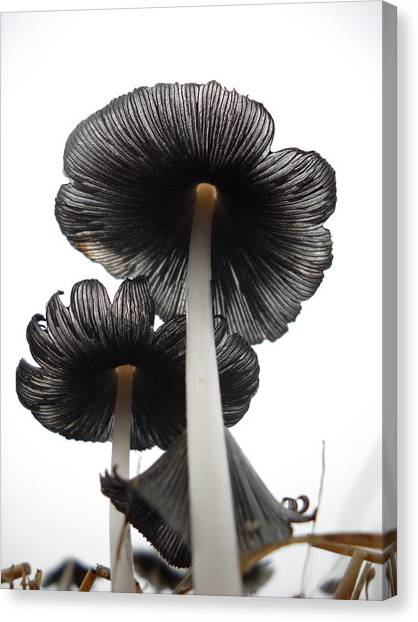 Giant Mushrooms In The Sky Canvas Print