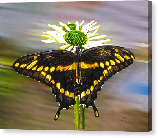 Giant Swallowtail 2 Canvas Print