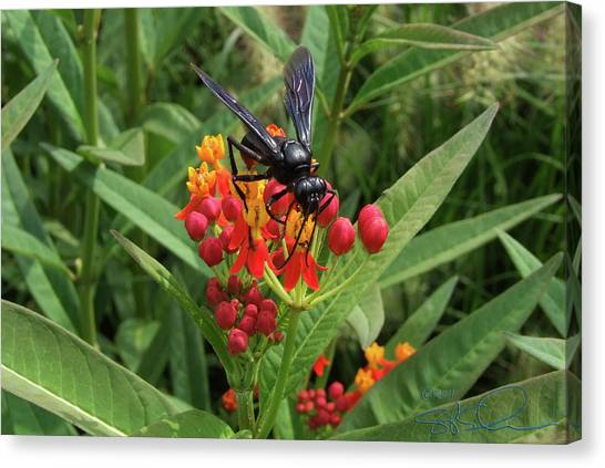 Giant Wasp Canvas Print