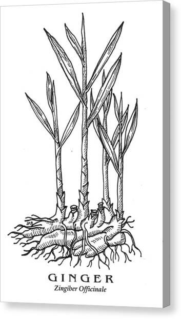 Ginger Botanical Canvas Print