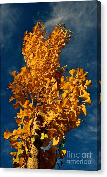 Gingko To The Sky Canvas Print
