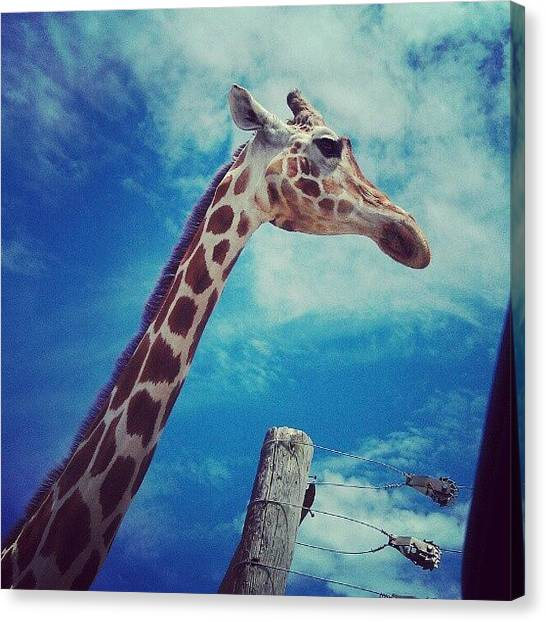 Jungles Canvas Print - Giraffe At The Safari! #giraffe #safari by Kelsi Doerrer