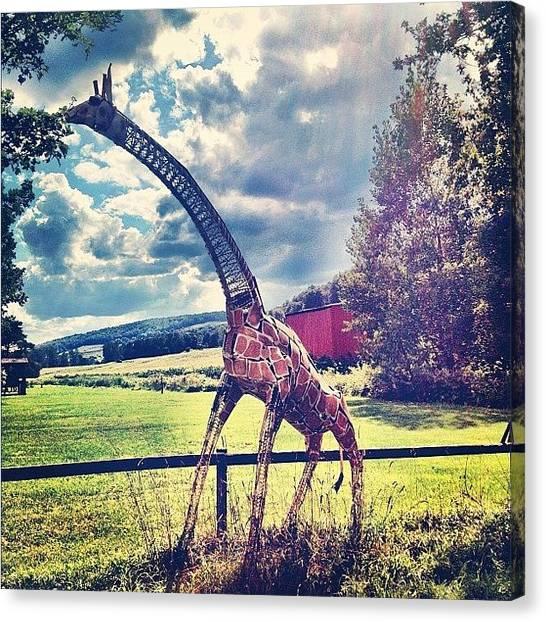 Giraffes Canvas Print - Giraffe! by Katie Destefano