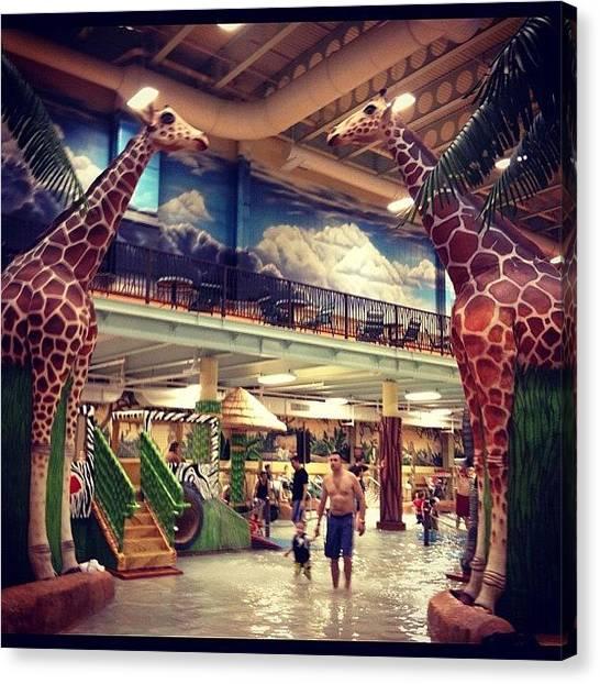 Giraffes Canvas Print - #giraffe #recreation #kalahari #resort by Alaa Almayahi