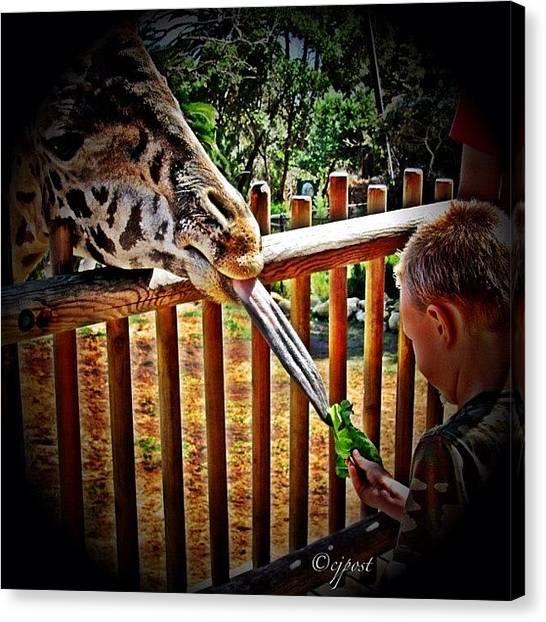 Lettuce Canvas Print - Giraffe Tongue #giraffe #tongue by Cynthia Post