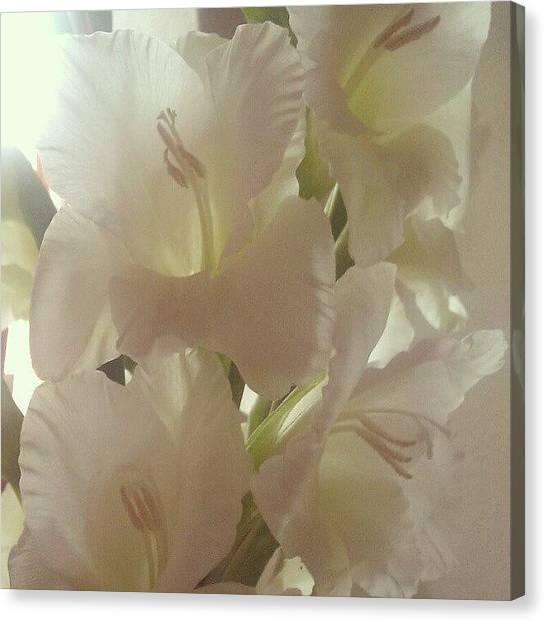 Presents Canvas Print - Gladioli by Kimberley Dennison