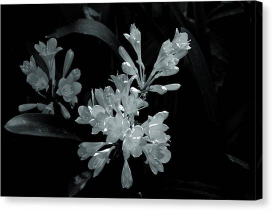 Gleaming Flowers Canvas Print by Rick Bragan