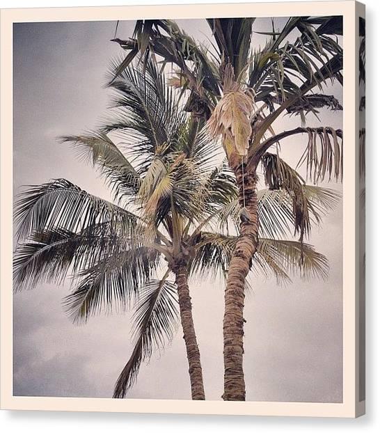 Soda Canvas Print - Gloomy Palm Trees by Soda Love