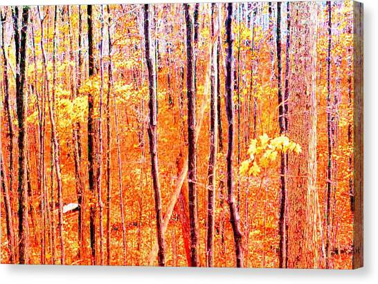 Glowing Forest  Canvas Print by Lyle Crump