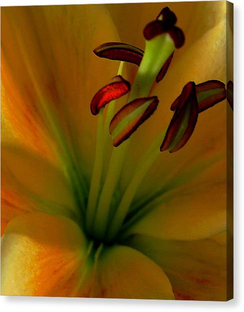 Glowing Lily Canvas Print