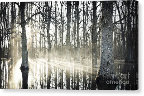 Glowing Woods Canvas Print