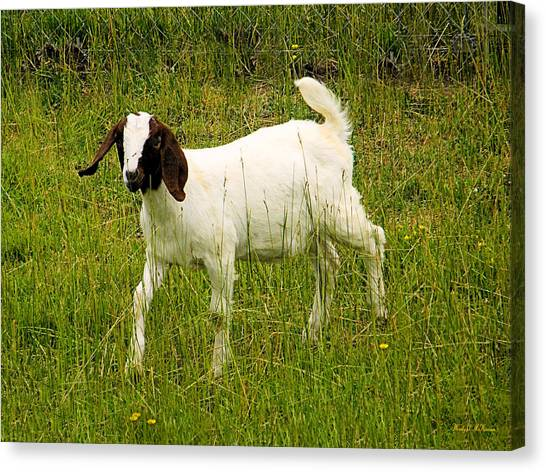 Goat Fun Canvas Print