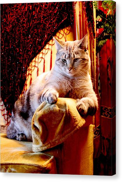 Manx Cats Canvas Print - Gold Wing Chair by Kathleen Horner