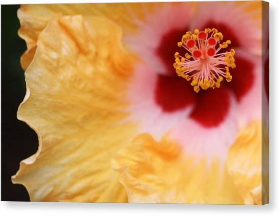 Golden And Crimson Hibiscus Canvas Print