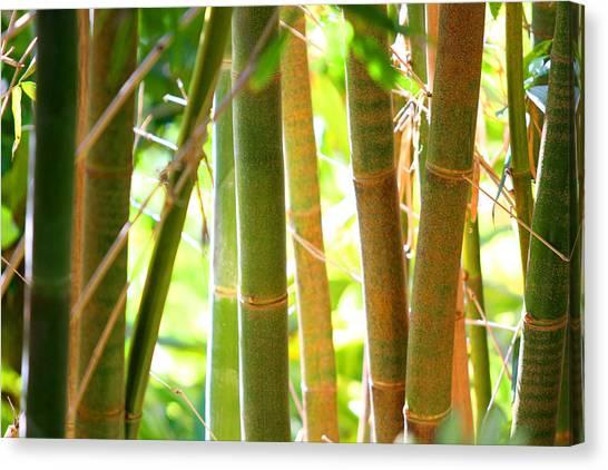 Golden Bamboo Canvas Print