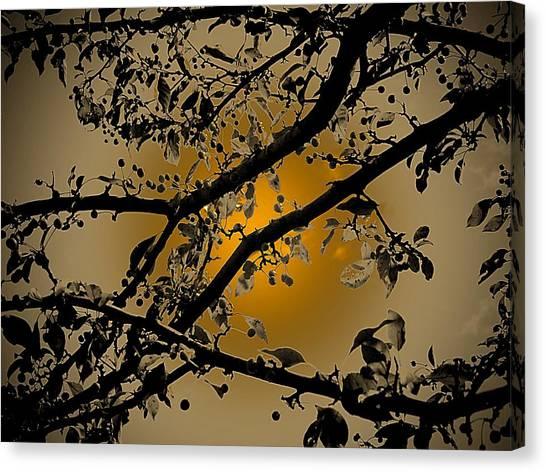 Golden Crabapple Canvas Print