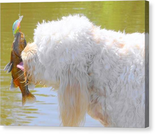 Golden Doodle And Goggle Eye Canvas Print by Betty Berard