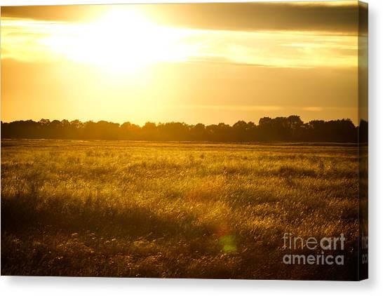 Golden Field Canvas Print by James Serikov