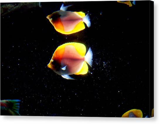Golden Fish Reflection Canvas Print