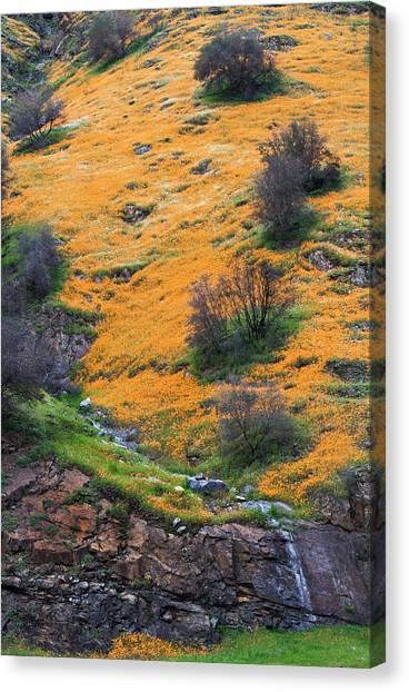 Golden Hills Canvas Print by Floyd Hopper
