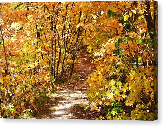 Golden Trail Canvas Print