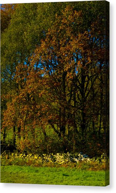 Canvas Print - Golden Trees by Peter Jenkins