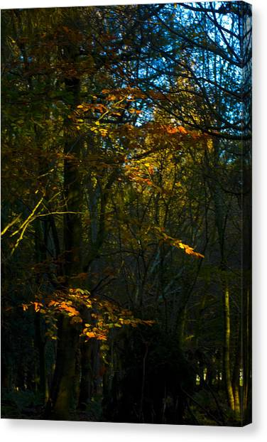 Canvas Print - Golden Woodland by Peter Jenkins