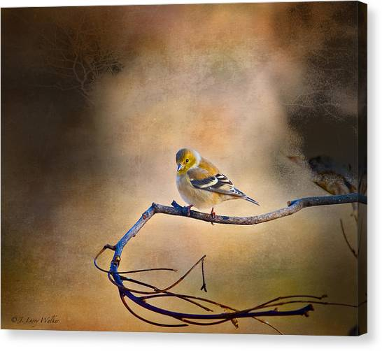 Goldfinch In Deep Thought Canvas Print
