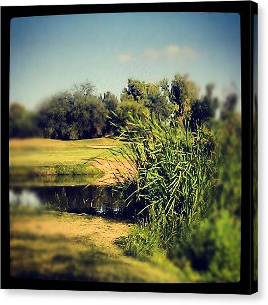 Swamps Canvas Print - #golf #course #reflections #pond #swamp by Dave Moore