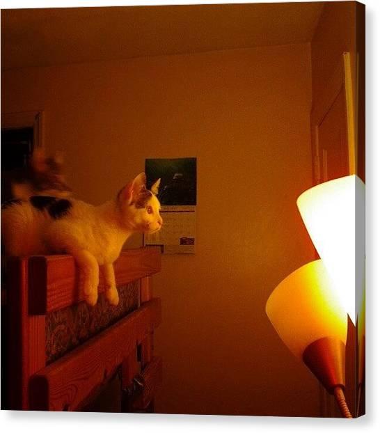 Hunting Canvas Print - Goo: Moth Hunter #cat #cats #gato #chat by Haley BCU
