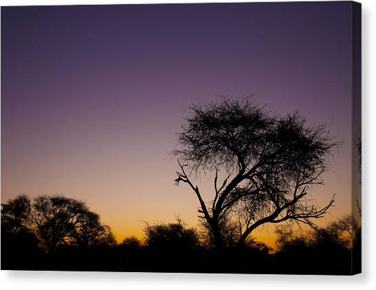 Good Morning Africa  Canvas Print