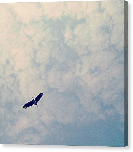 Storks Canvas Print - Good Morning All. Here's A by Gabriel Kang