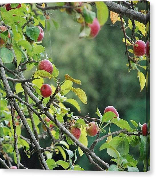 Fruit Trees Canvas Print - Good Morning Everybody! Have A Nice by Val Lao