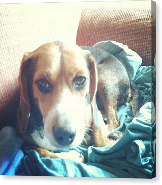 Beagles Canvas Print - Good Morning! by Harsh Vahalia