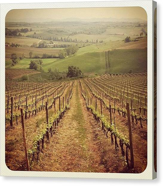 Vineyard Canvas Print - Good Morning! Heres One From Tuscany by Gabriel Kang