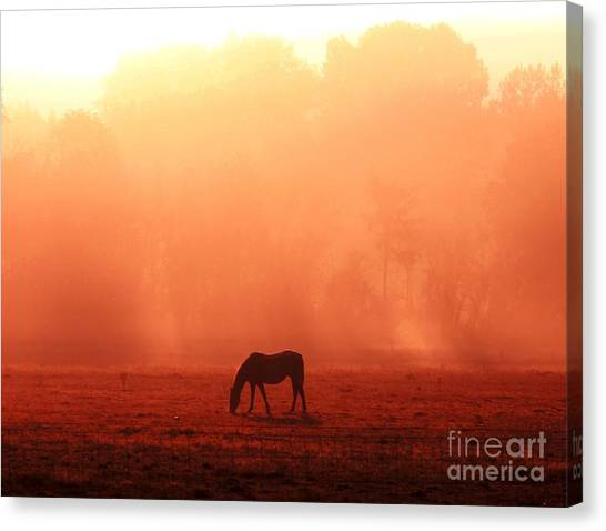 Good Morning Horse Canvas Print