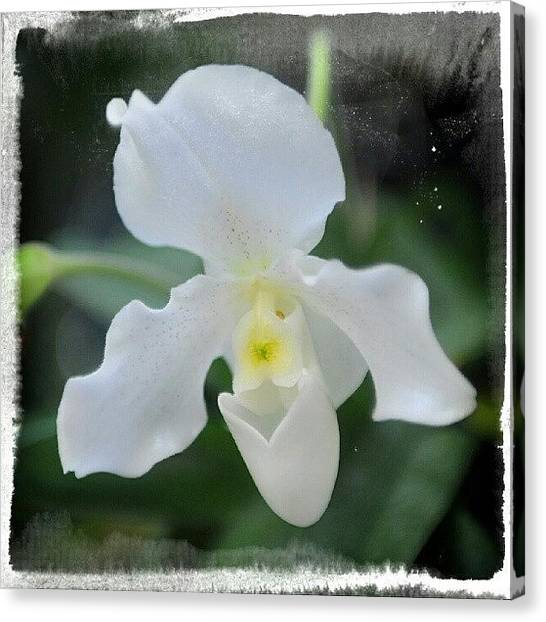 Orchids Canvas Print - Good Morning! by Natalia D