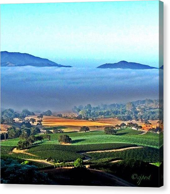 Vineyard Canvas Print - Good Morning World! #frommybackyard by Cynthia Post